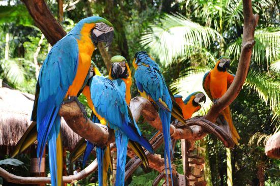 екскурзия до бразилия и аржентина
