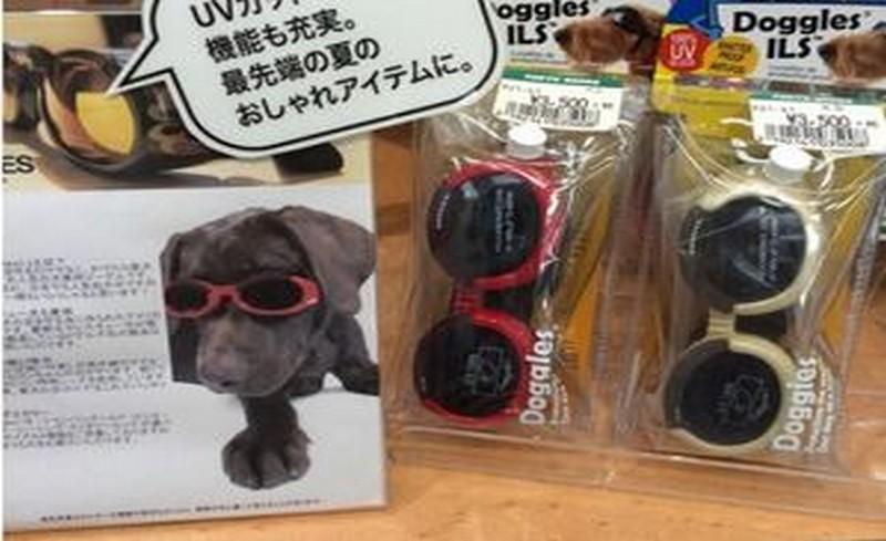 очила за кучета в Япония