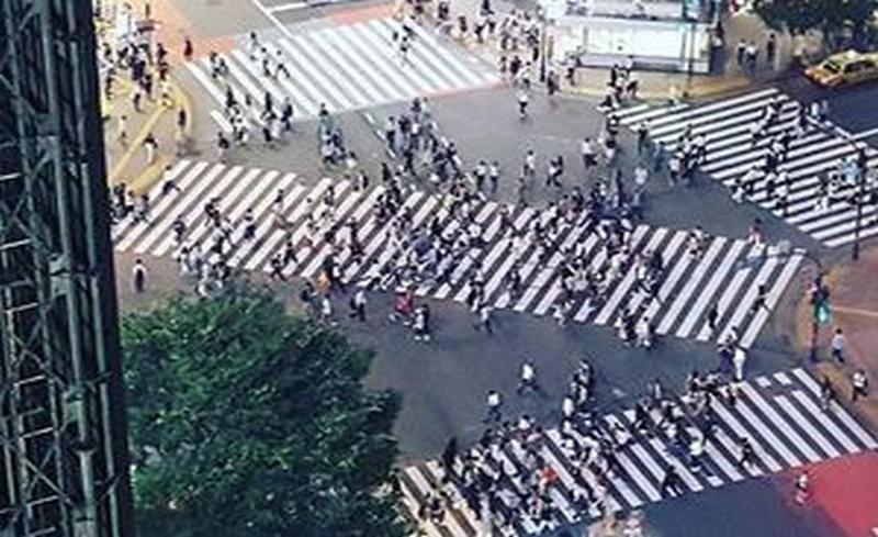 диагонална зебра в Япония
