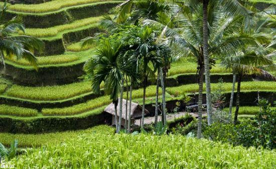 почивка на остров бали